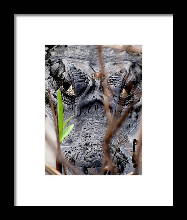 Cayman Framed Print featuring the photograph Cayman Closeup by Elizabeth Hardie