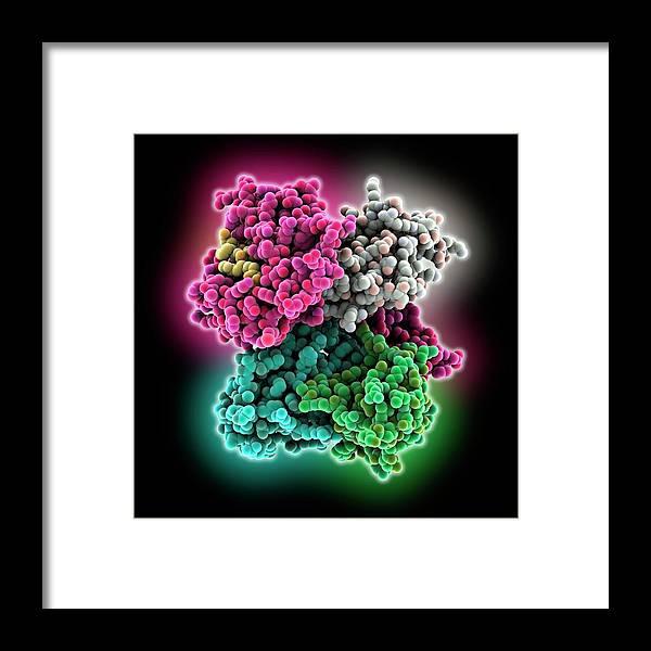 Antigen Framed Print featuring the photograph Cd8 Receptor Bound To Antigen by Laguna Design
