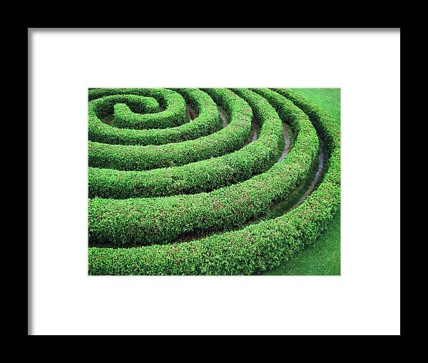 Tranquility Framed Print featuring the photograph Cedar Maze by Francois Dion
