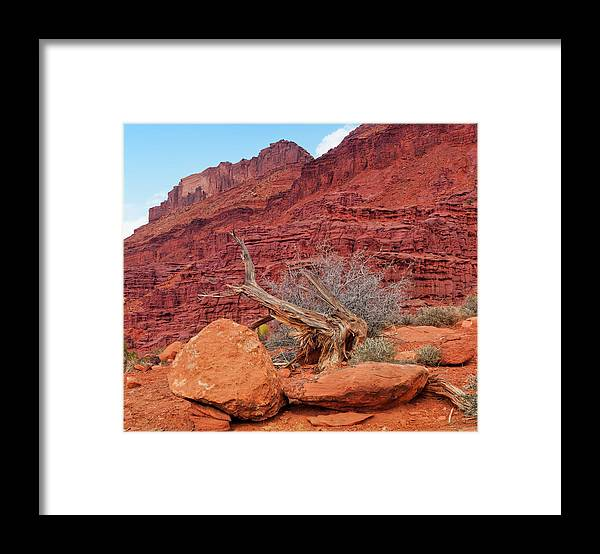 Cedar Tree Framed Print featuring the photograph Cedar Wood Tree, Fisher Towers, Moab by Fotomonkee