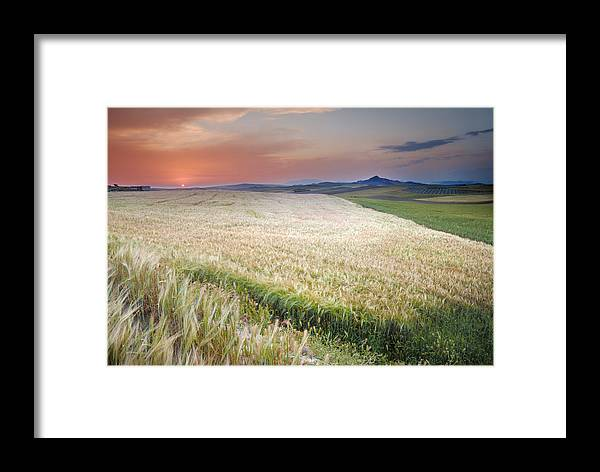 Plants Framed Print featuring the photograph Cereal Fields by Guido Montanes Castillo