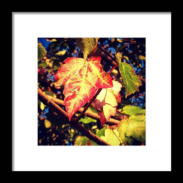 Changing Framed Print featuring the photograph Changing Season by Candice Trimble