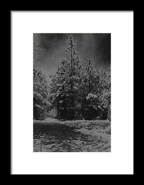 Pinetree Framed Print featuring the photograph Charcoal Snowfall by Carolyn Stagger Cokley