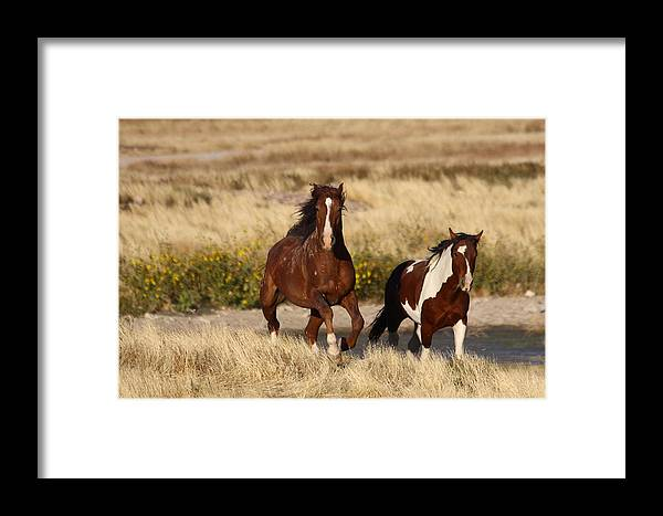 Wild Framed Print featuring the photograph Charge by Gene Praag