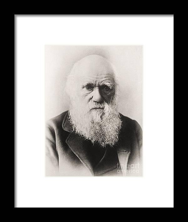 Charles Darwin Framed Print by English School