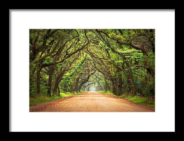 Swamp Framed Print featuring the photograph Charleston SC Edisto Island - Botany Bay Road by Dave Allen