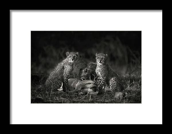 Africa Framed Print featuring the photograph Cheetah Cubs by Mario Moreno