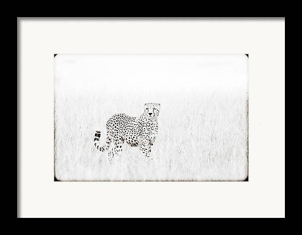 Africa Framed Print featuring the photograph Cheetah In The Grass by Mike Gaudaur