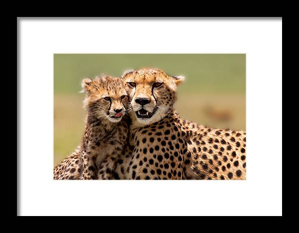 Portrait Framed Print featuring the photograph Cheetah Mother And Cub In Masai Mara by Maggy Meyer