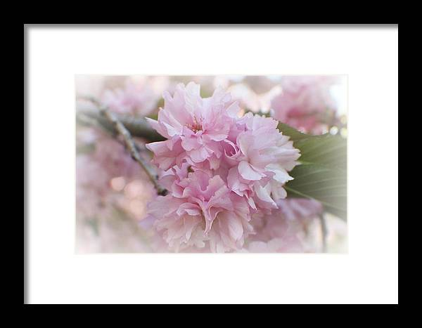 Cherry Blossom Framed Print featuring the photograph Cherry Blossom I by Lisa Hurylovich