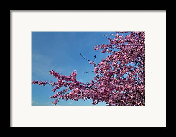 Architectural Framed Print featuring the photograph Cherry Blossoms 2013 - 037 by Metro DC Photography