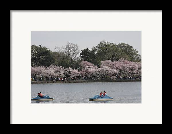 Cherry Framed Print featuring the photograph Cherry Blossoms - Washington Dc - 011315 by DC Photographer
