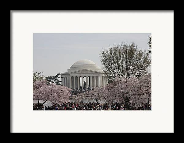 Cherry Framed Print featuring the photograph Cherry Blossoms With Jefferson Memorial - Washington Dc - 01132 by DC Photographer