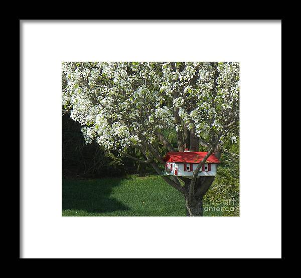 Spring Framed Print featuring the photograph Cherry Home by Ruta Naujokiene