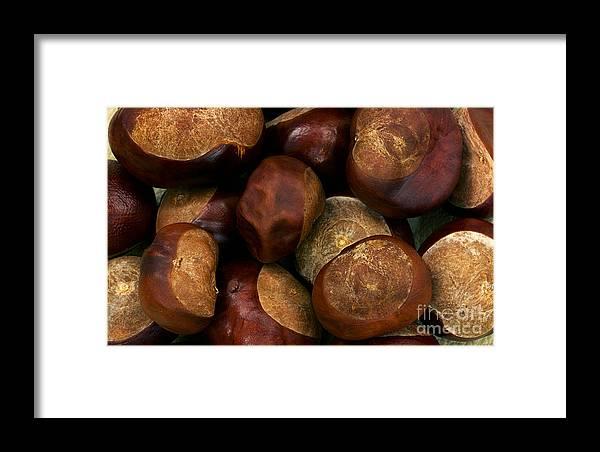 Chestnuts Framed Print featuring the photograph Chestnuts by Jolanta Meskauskiene