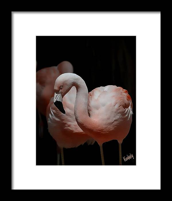 Extreme Gregariousness Defines Flamingo Life. Framed Print featuring the pyrography Chilean Flamingos by Kimberly Wanca