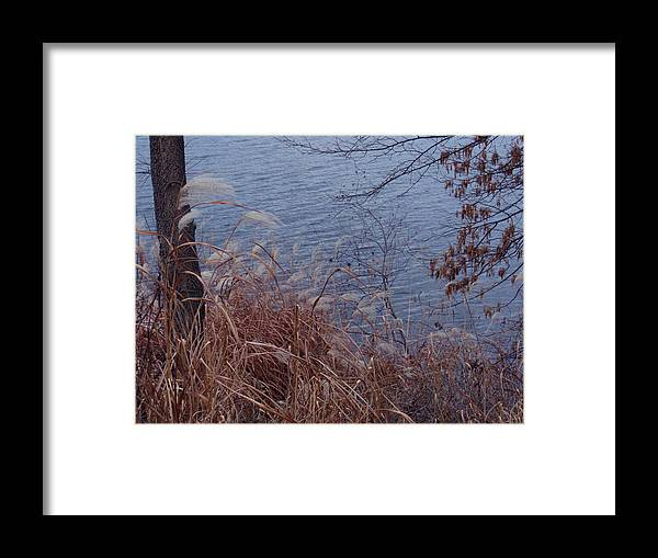Autumn Framed Print featuring the photograph Chill by Wild Thing