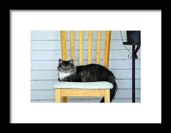 Cat Framed Print featuring the photograph Chillin by Camille Lopez