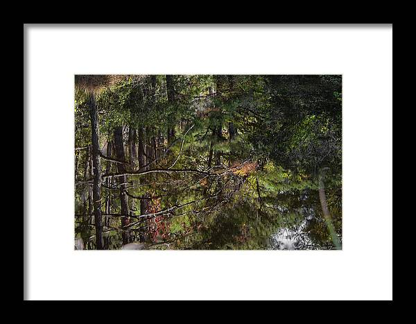 Water Framed Print featuring the photograph Chincoteague Reflection by Erika Fawcett