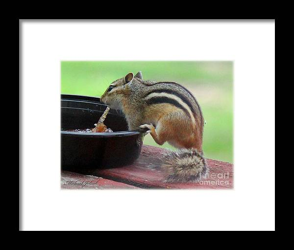 Chipmunk Framed Print featuring the photograph Chipmunk And Jam by Michael Johnk