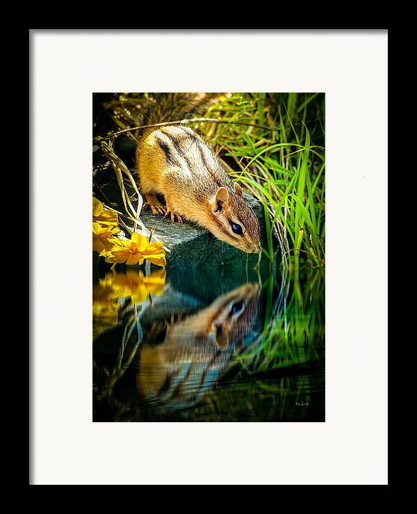 Chipmunk Framed Print featuring the photograph Chipmunk Reflection by Bob Orsillo