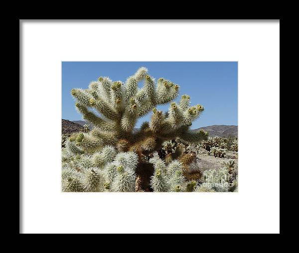 California Framed Print featuring the photograph Cholla Cactus by Deborah Smolinske