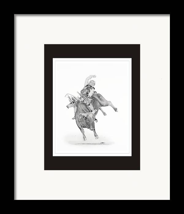 Bull Riding Framed Print featuring the drawing Chris Shivers by Don Medina