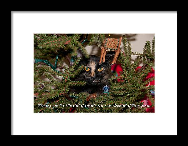 Cats Framed Print featuring the photograph Christmas Cat by Guy Whiteley