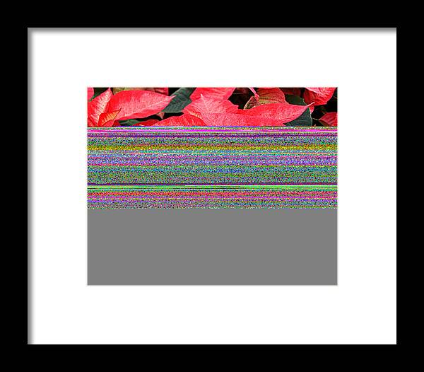 Flowers Framed Print featuring the photograph Christmas Poinsettia's by Carol Toepke