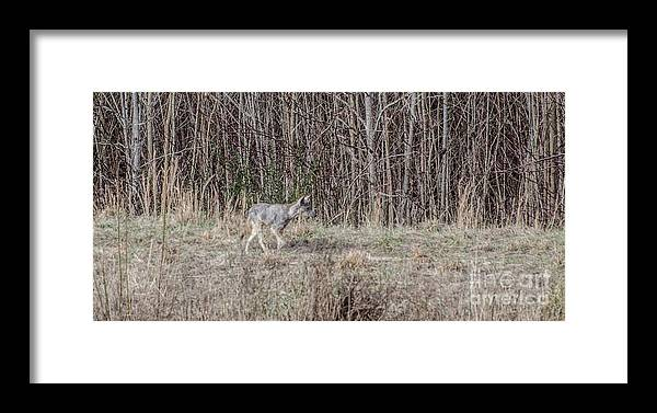 Animal Framed Print featuring the photograph Christmas Present by Donna Brown