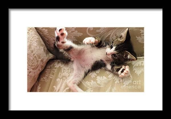 Kitten Framed Print featuring the photograph Christopher Paws Up by Jussta Jussta