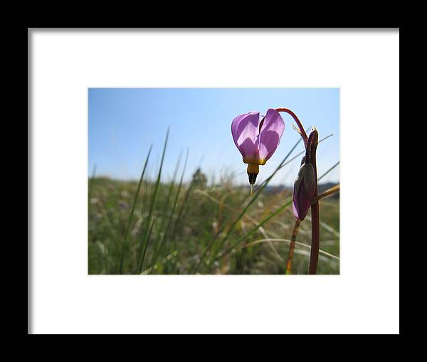Lady Slipper Framed Print featuring the photograph Cinderella's Other Shoe by Jesse Woodward