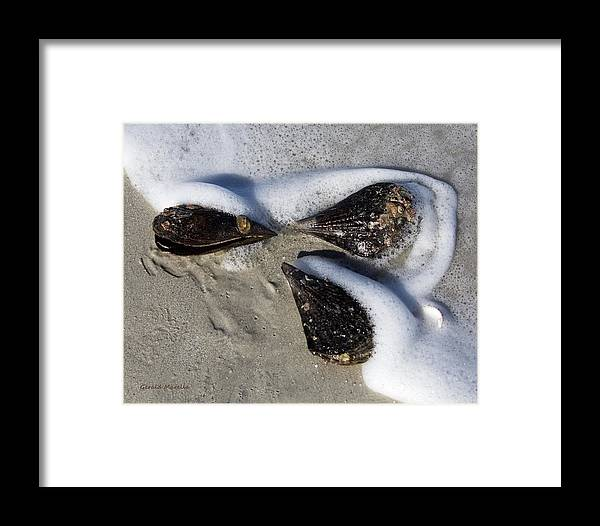 Beach Framed Print featuring the photograph Clam Shells And Surf by Gerald Marella