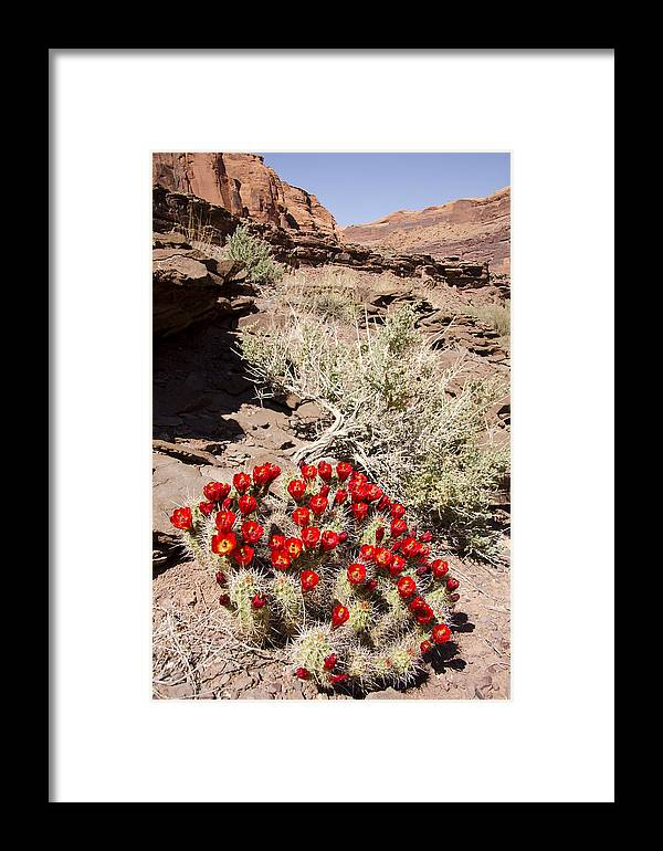 Red Rock Framed Print featuring the photograph Claret Cups And Jug Handle Arch by Duncan Mackie