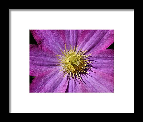 Clematis Framed Print featuring the photograph Clematis Center by Gene Cyr