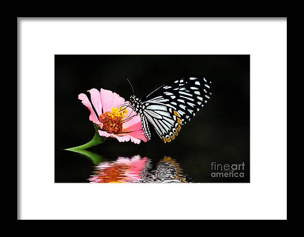 Butterfly Framed Print featuring the photograph Cliche by Lois Bryan
