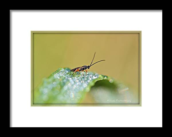 Nature Framed Print featuring the photograph Climbing The Diamond Hill by Michaela Preston