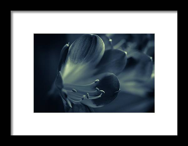 Clivia Miniata Framed Print featuring the photograph Clivia Miniata II by Andreas Levi