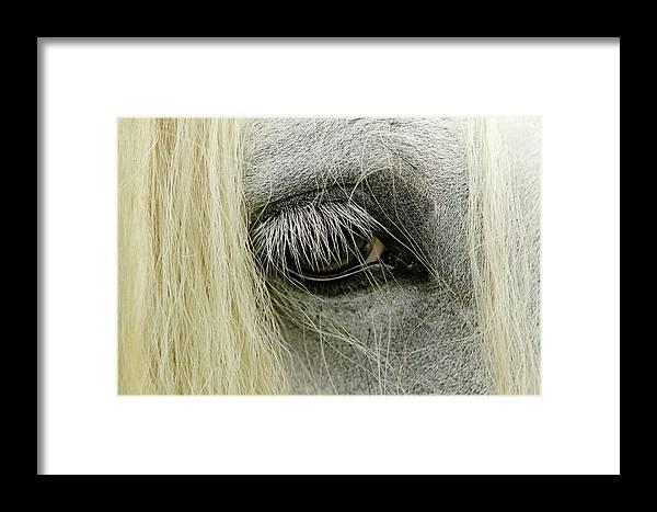 Adam Jones Framed Print featuring the photograph Close-up Details Of Gypsy Vanner Horse by Adam Jones