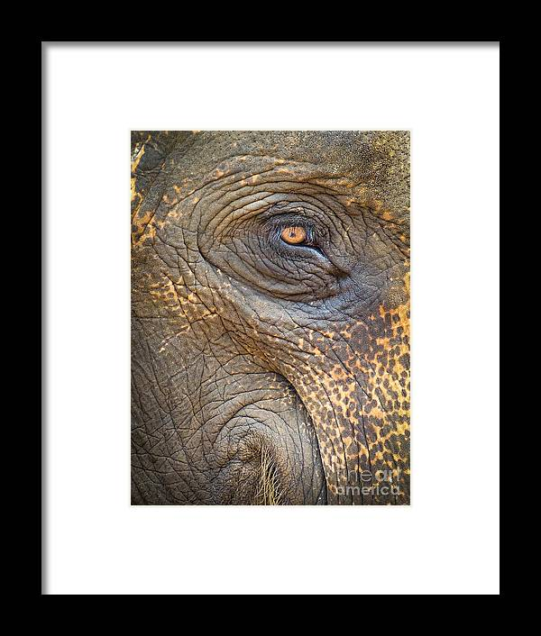 Aged Framed Print featuring the photograph Close-up Elephant Eye by Inez Wijker