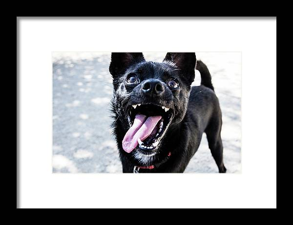Pets Framed Print featuring the photograph Close-up Shot Of A Little Black Dog - by Amandafoundation.org
