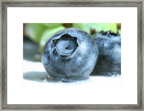 signed. Nature close-up Fine Art Photo Print Blueberries 5 x 7 matted and ready to frame