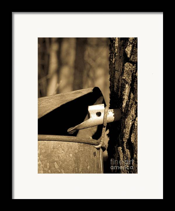 Tapping Framed Print featuring the photograph Closeup Of A Maple Tap by Edward Fielding