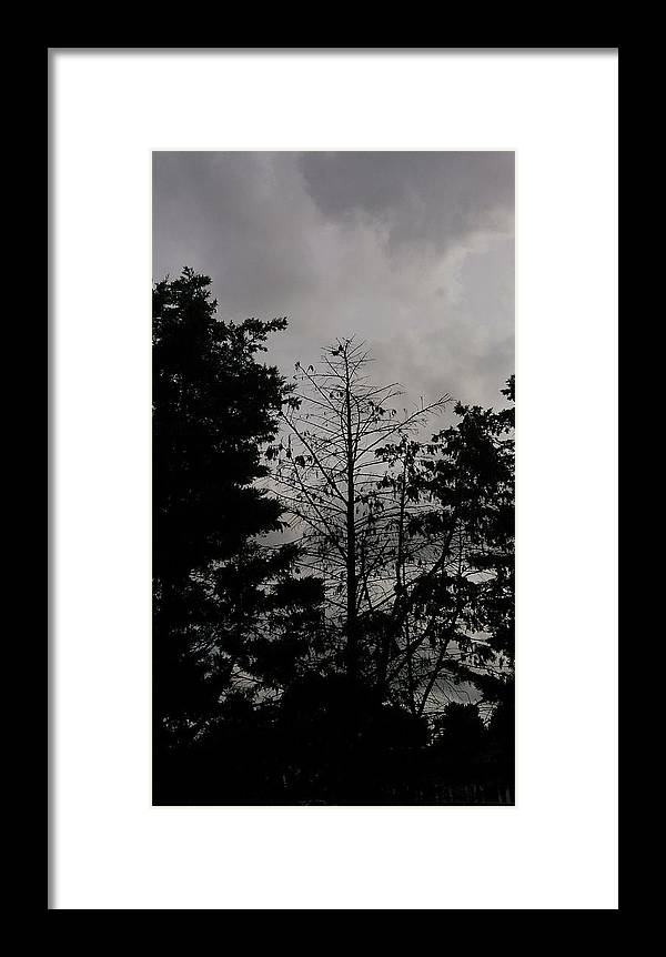 Clouds Framed Print featuring the photograph Clouds And Trees by Moshe Harboun