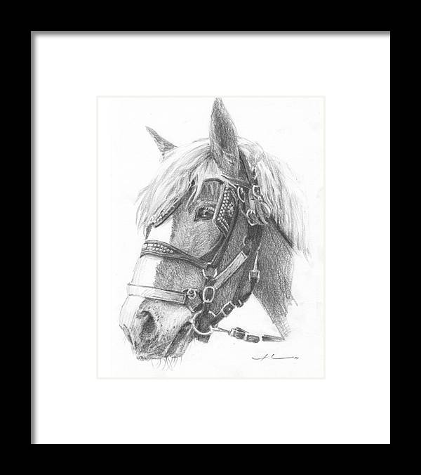 <a Href=http://miketheuer.com Target =_blank>www.miketheuer.com</a> Clydesdale Horse Pencil_portrait Framed Print featuring the drawing Clydesdale Horse Pencil_portrait by Mike Theuer