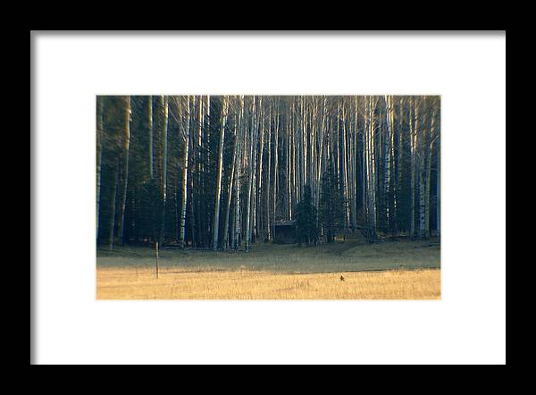 Forest Framed Print featuring the photograph Coconino National Forest by Jeri lyn Chevalier