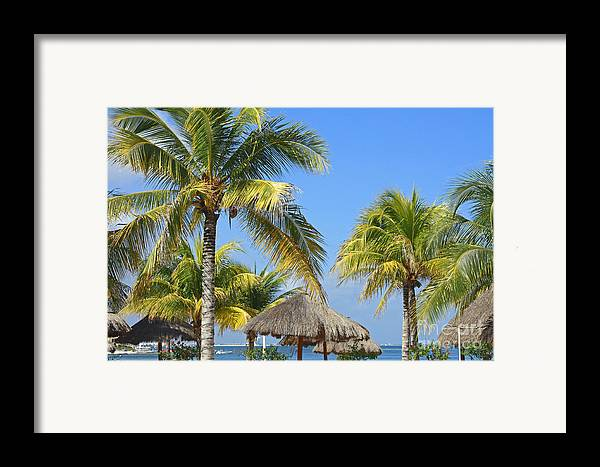 Tropical Framed Print featuring the photograph Coconut Palm Forest by Charline Xia