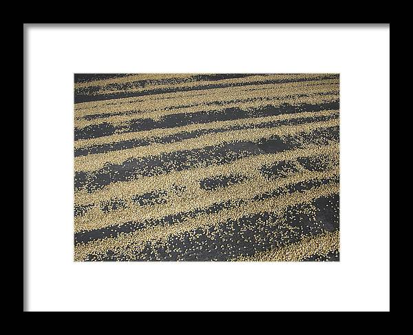 Dry Framed Print featuring the photograph Coffee by Ramunas Bruzas