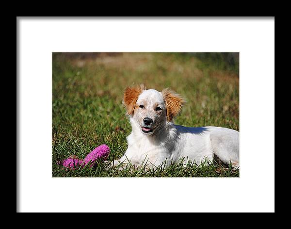 Puppy Framed Print featuring the photograph Collie Puppy by James Wampler