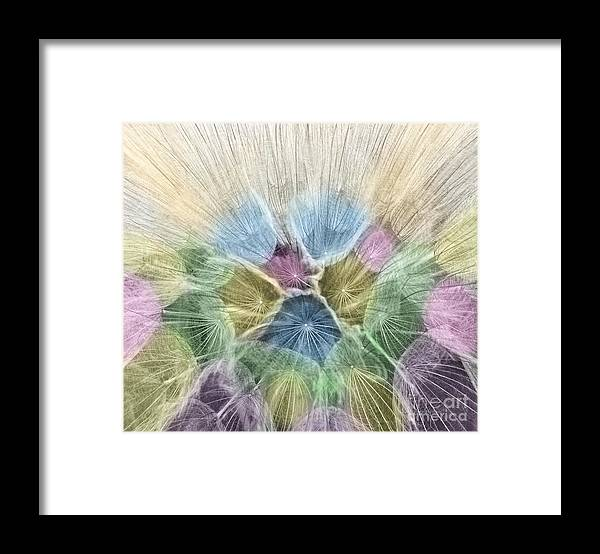 Oyster Plant Framed Print featuring the photograph Colored Oyster Plant Seedhead by Clare VanderVeen